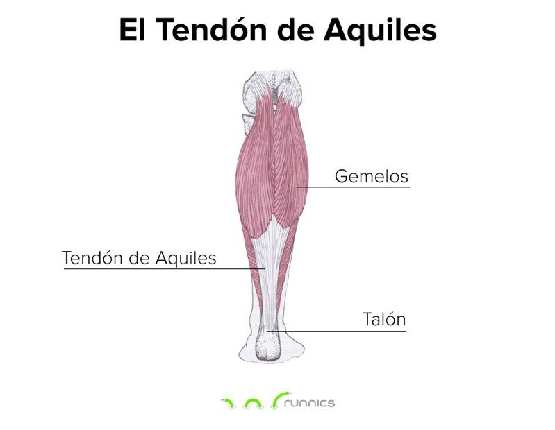 tendon-de-aquiles-diagrama-runnics