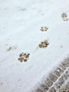 Winter scene - animal prints