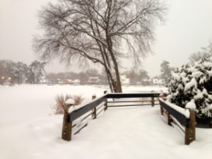 Winter scene - tree and fence