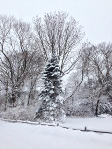 Winter scene - tree